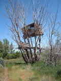 Maison dans l'arbre